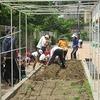 やまびこ:ひまわりの苗を植え替え