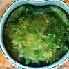 【Biotop】水草(マツモ)がずっと元気!おススメLEDライトの効果大。