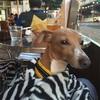 横浜関内  犬連れビールの店