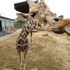 GWは和歌山のアドベンチャーワールドで動物さん達と戯れました