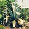 世界各地で息する3千種の植物とアーバンな街「つくば」で触れ合う。