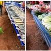 タイの本当の田舎の市場 東北イサーン地方