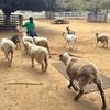 アンデルセン公園〜山羊と羊のお食事〜