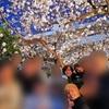 安倍首相、昭恵夫人の花見は「レストランの敷地内」【Yahoo掲示板・ヤフコメ抜粋】