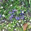 お城跡に咲いている花たち
