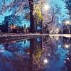 🌅早朝の谷中霊園 桜並木🌸〜嵐の後〜