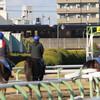 育成馬ブログ 宮崎⑤