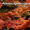 【Autumn leaves】Japanese garden next to Tokyo Dome / Koishikawa-Kōrakuen Garden @KORAKUEN