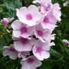 庭の花。。。