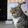 1月前半の #ねこ #cat #猫 その2