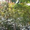 【日記】おうち時間のストレス発散に庭の木を切るよ〜‼