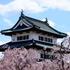まだまだ楽しめる!GW近くの桜の花見3選☆