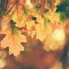 【ブログを始めて106日目】最近涼しくなってきたからブログのトップページを秋っぽい写真に変更してみた私の話。
