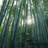 江ノ電・鎌倉人三昧(その6) ―報国寺 ミシュラングリーンガイドの威力ー