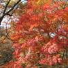 神戸市立森林植物園の紅葉は今が見頃