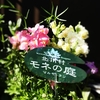 モネの庭からの贈り物。