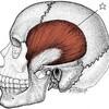 偏頭痛(´-ω-`)