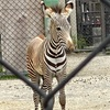 京都市動物園に行きました 9月