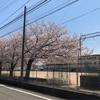 金沢市新保本「一世風靡」でエビ薫る期間限定桜えびそば