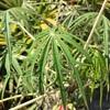 傷を治す植物