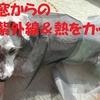❝窓のUV対策❞  愛犬と暮らす家の工夫⑧