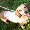 犬のリードと首輪の収納について
