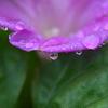朝、雨上がりに花を撮影→小石川後楽園に行ってきた