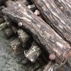 キノコの栽培記録