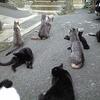 猫の恩返し? 3.11で津波を察知した田代島の猫達