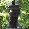 【北木島のネコ】千鳥-大悟の地元の島でもネコに出会うのか?