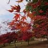 日本三名園の1つ岡山後楽園の紅葉を見る