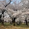 【埼玉県】で訪れたい名所の3つは羊山公園・川越・渋沢栄一記念館