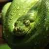 結局Pythonって何が出来るの?Pythonで作れるサービスをまとめてみた