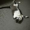 6月末、車に轢かれて死んだグレー猫