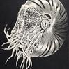オームガイをモチーフに立体感があるデザインにした切り絵アート作品『Nautilus』