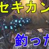 【MHW】新大陸の主、カセキカンス釣ってみた!釣れる場所などについて解説!【モンスターハンターワールド/解説動画】