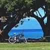 【アナザースカイ】長嶋一茂&長谷川潤が語るハワイの魅力や教えたくない穴場を紹介