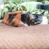 【愛猫日記】毎日アンヌさん♯122