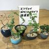 【レポート】「ジブンだけの『手のひらの植物』をつくる教室」