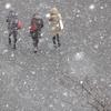 大阪大学・吹田キャンパスで雪