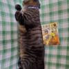 グサリときた金言です…😓「黒猫王子の喫茶店」の感想( @chaiKOPOROtema さん)