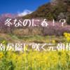 南房総の冬に咲く元朝桜を撮影してきた【抱湖園】