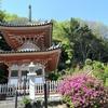 コバノミツバツツジを愛でて歩くかい・武庫山『神咒寺』