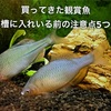 買ってきた金魚やタナゴを水槽に入れる方法&注意点を5つ紹介