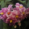5月17日誕生日の花と花言葉