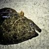 波崎漁港でソフトワーム&ジグを投げ飛ばし続けた日の釣果
