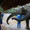 【ゾウの村】1泊2日のゾウ使い体験!料金&内容【タイ子連れ旅26】