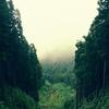 【無料/フリーBGM素材】霧の風景、森林、肌寒さ『Landscape in the Mist』即興アンビエント/イージーリスニング
