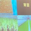 NPO法人『ちんじゅの森』で、お米と芋煮のワークショップに参加しました