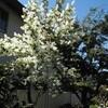 4月16日、春の一日(母の見舞い)